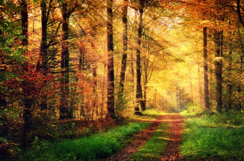 Autumn forest scenery with rays of warm light